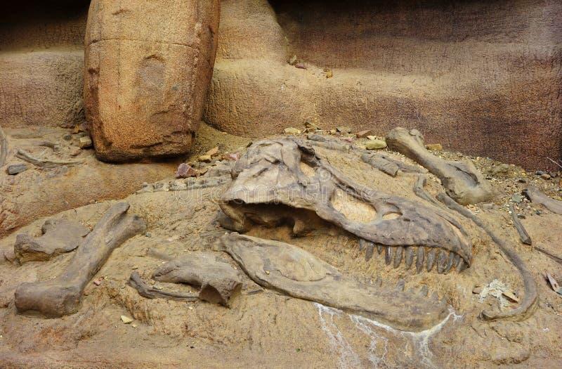 Απολίθωμα δεινοσαύρων στοκ εικόνες
