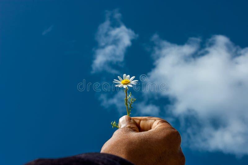αποδεχθείτε το χέρι φιλίας μαργαριτών έννοιας ο ουρανός μου Λουλούδι στοκ φωτογραφία με δικαίωμα ελεύθερης χρήσης