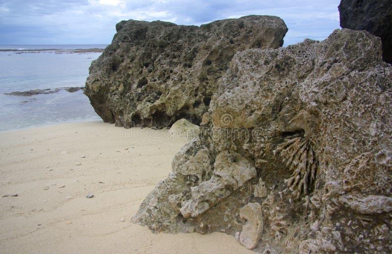 Απολιθωμένα κοράλλι - λεπτομέρεια στοκ φωτογραφίες