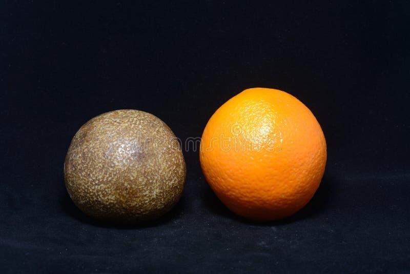 Απολιθωμένα πορτοκάλι στοκ εικόνες