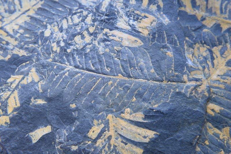 Απολιθωμένη σφραγίδα φτερών δέντρων στοκ φωτογραφία με δικαίωμα ελεύθερης χρήσης