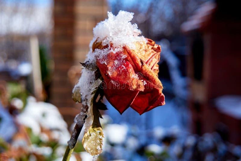 Απροσδόκητη άφιξη του χειμώνα στοκ εικόνες