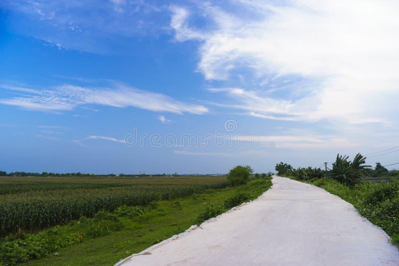 Απόγευμα cornfield στοκ φωτογραφία με δικαίωμα ελεύθερης χρήσης