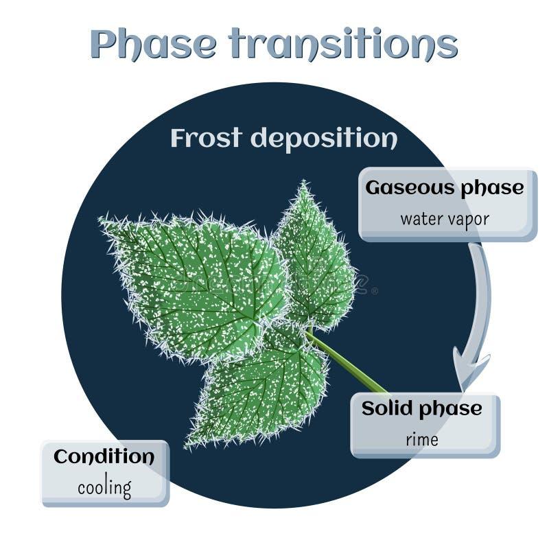Απόθεση παγετού - μαλακή πάχνη στα φύλλα σμέουρων Μετάβαση φάσης από αεριώδη στο στερεάς κατάστασης απεικόνιση αποθεμάτων