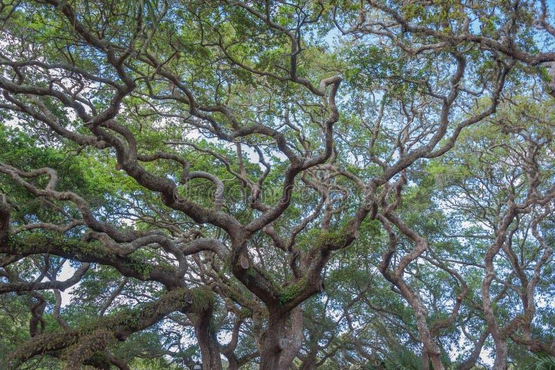 απόκοσμα δέντρα στοκ εικόνες