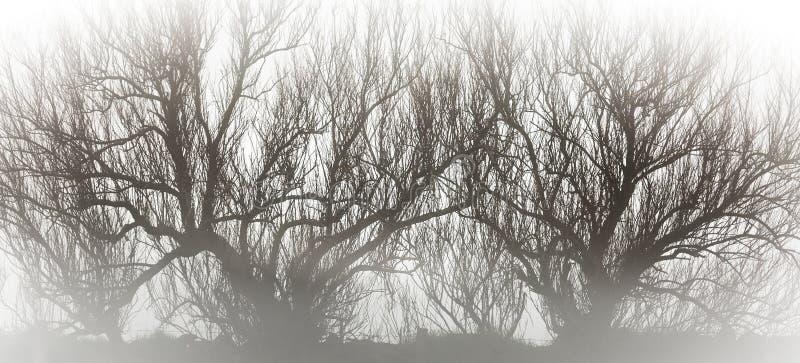 Απόκοσμα σκιαγραφημένα δέντρα στην υδρονέφωση στοκ εικόνες