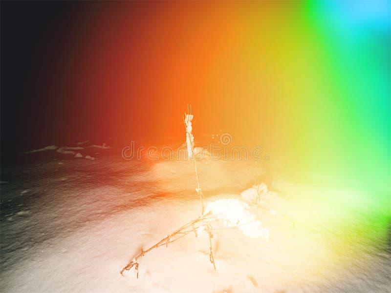 Απόκοσμος χειμώνας στο δάσος νύχτας κάτω από το χιόνι Φίλτρο Hipster στοκ φωτογραφία με δικαίωμα ελεύθερης χρήσης