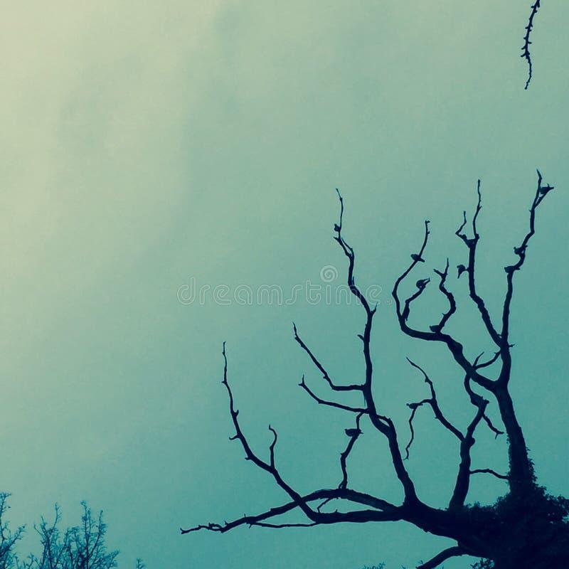 απόκοσμο δέντρο στοκ φωτογραφίες με δικαίωμα ελεύθερης χρήσης