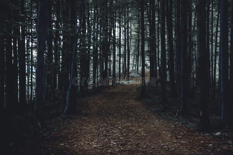 Απόκοσμο και σκοτεινό ομιχλώδες δάσος στα πράσινων και καφετιών χρώματα σούρουπου, στοκ φωτογραφία με δικαίωμα ελεύθερης χρήσης