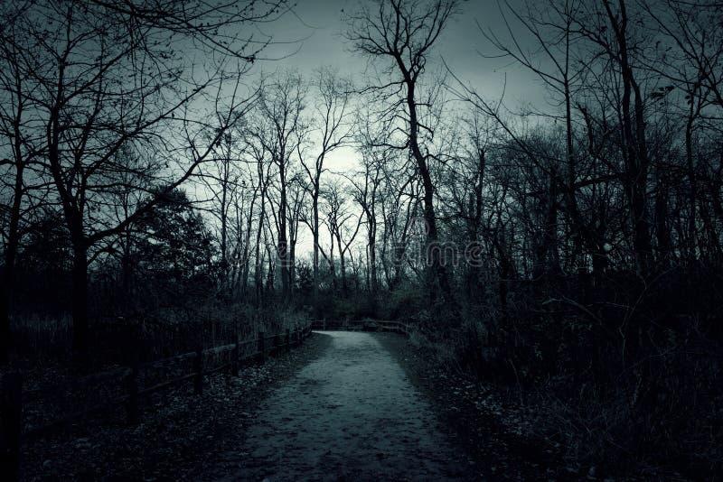 Απόκοσμο misty ομιχλώδες δάσος με το δραματικό ουρανό στοκ φωτογραφίες με δικαίωμα ελεύθερης χρήσης