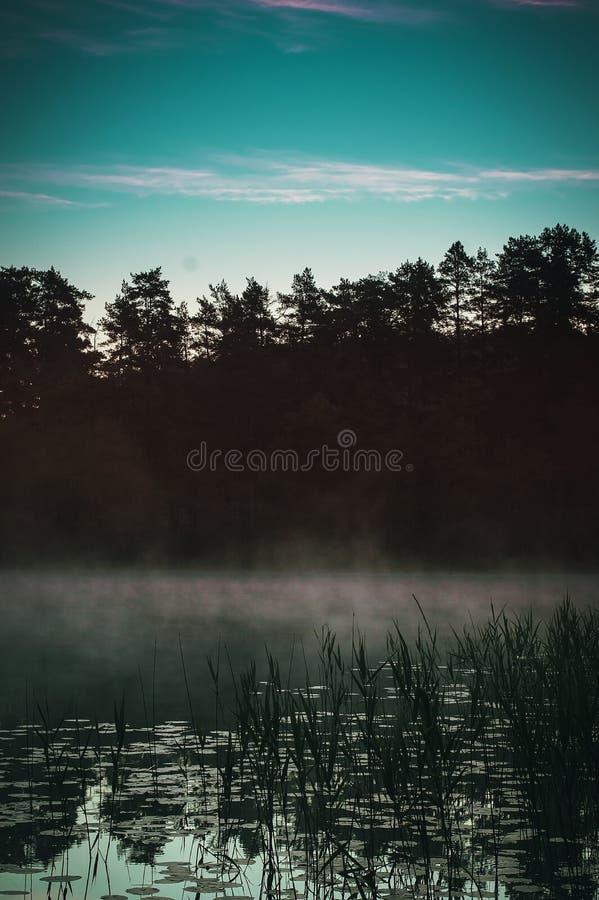 Απόκρυφη ομίχλη πρωινού στη δασική λίμνη στοκ εικόνα