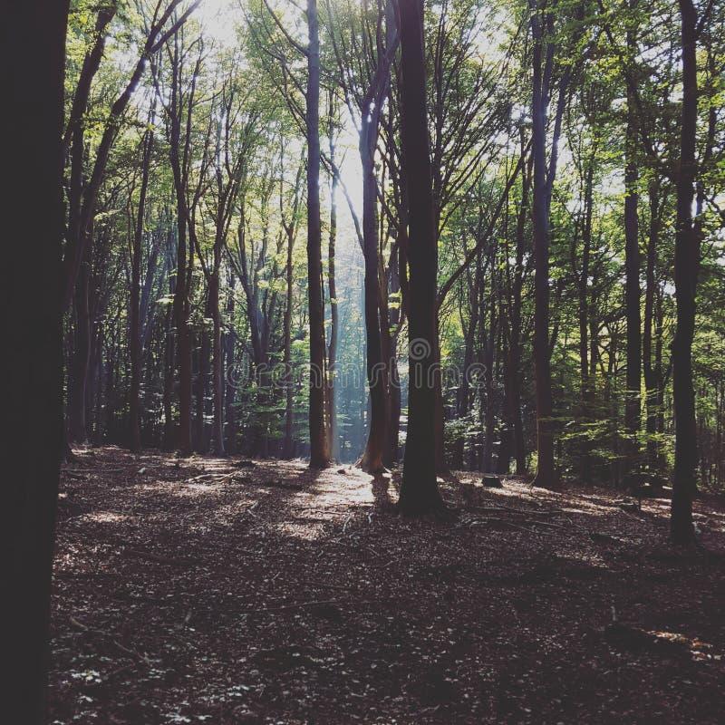 Απόκρυφο δάσος στοκ φωτογραφίες