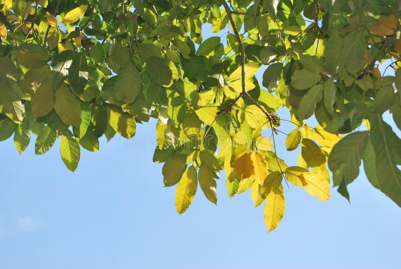 Απόλαυση ήλιων πρωινού στα θερινά φύλλα στοκ φωτογραφία