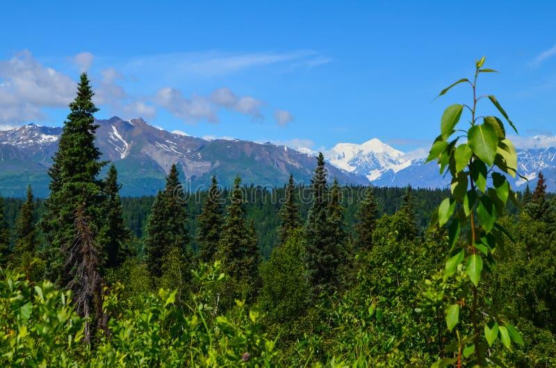 Απόμακρη άποψη του υποστηρίγματος Denali - ΑΜ Mckinley από το Βορρά άποψης εθνικών οδών Denali με το δάσος πεύκων μπλε ουρανού κα στοκ φωτογραφίες