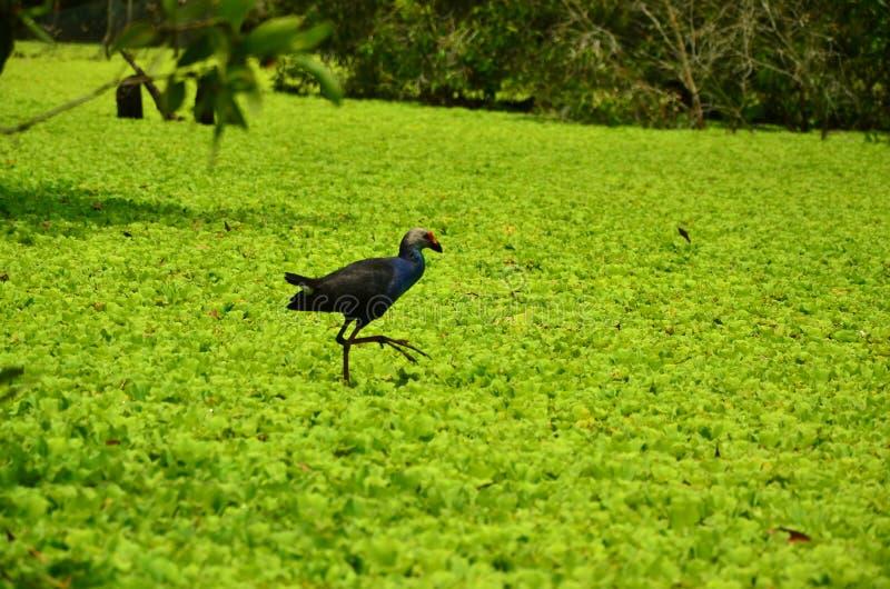 Απόμερος - μόνο πουλί στοκ εικόνα με δικαίωμα ελεύθερης χρήσης