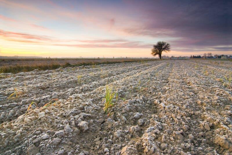 Απόμερο δέντρο στη χρυσή ανατολή στοκ εικόνες με δικαίωμα ελεύθερης χρήσης