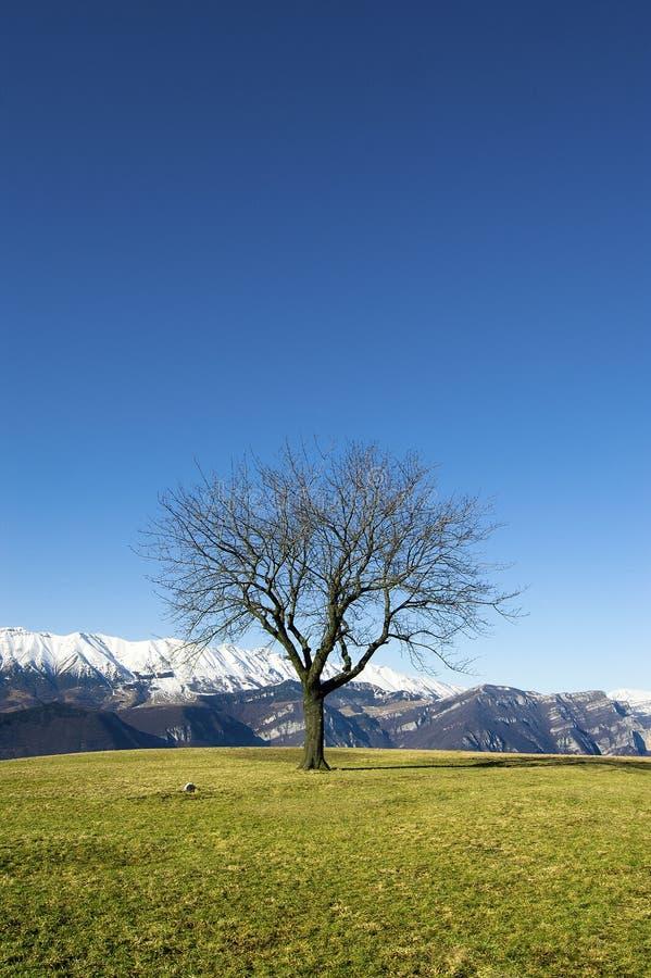 απόμερο δέντρο μπλε ουρα&n στοκ φωτογραφίες