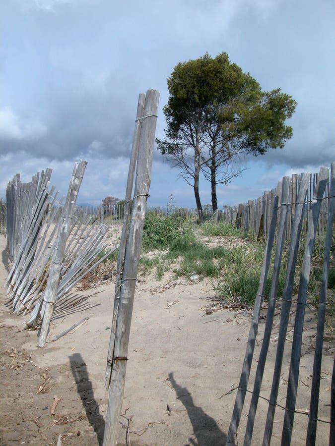 Download απόμερο δέντρο στοκ εικόνα. εικόνα από επαρχία, χώρα - 13186097