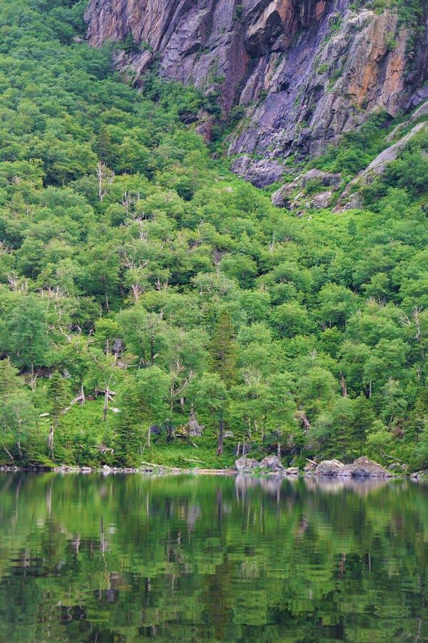Απότομη δασική κλίση μεταξύ του απότομου βράχου και ακόμα των νερών στοκ εικόνα με δικαίωμα ελεύθερης χρήσης