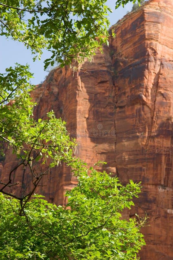 Απότομοι βράχοι κόκκινου ψαμμίτη, εθνικό πάρκο Zion, Γιούτα στοκ φωτογραφία με δικαίωμα ελεύθερης χρήσης