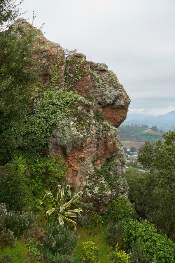 Απότομος βράχος με τις εγκαταστάσεις στοκ εικόνες με δικαίωμα ελεύθερης χρήσης