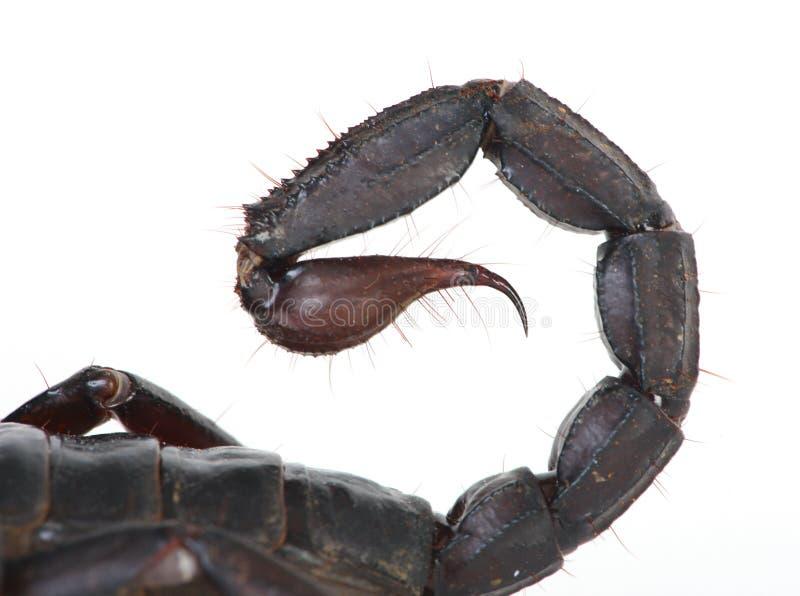 απότομο χτύπημα σκορπιών στοκ εικόνες με δικαίωμα ελεύθερης χρήσης