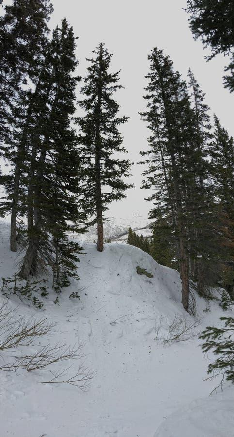 Απόψεις βλαστών σκι χειμερινών φαραγγιών στα δέντρα γύρω από τα μπροστινά δύσκολα βουνά Wasatch, χιονοδρομικό κέντρο του Μπράιτον στοκ εικόνες