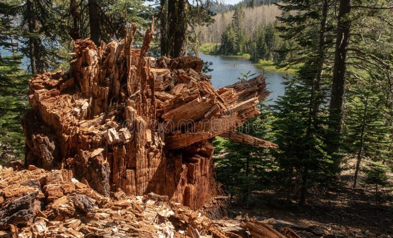 Απόψεις κατά μήκος ενός ίχνους πεζοπορίας κοντά στη λίμνη Tahoe στοκ φωτογραφία με δικαίωμα ελεύθερης χρήσης