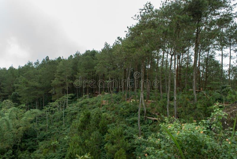 Απόψεις του δάσους πεύκων Kalilo από τη δύση στοκ φωτογραφίες με δικαίωμα ελεύθερης χρήσης
