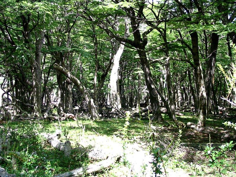 Απόψεις του δάσους στα βουνά των Άνδεων, Παταγωνία, Αργεντινή στοκ εικόνα με δικαίωμα ελεύθερης χρήσης