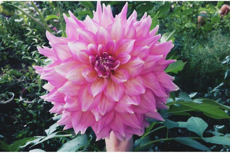 Απόλαυση λουλουδιών στοκ φωτογραφίες με δικαίωμα ελεύθερης χρήσης