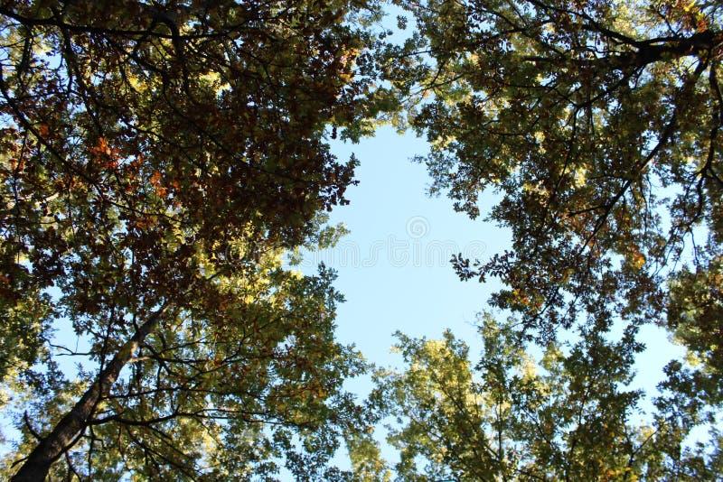 Από κάτω προς τα επάνω άποψη του μπλε ουρανού, γύρω από τα δέντρα, τοπίο του εθνικού πάρκου Pollino, μια ευρεία φυσική επιφύλαξη  στοκ φωτογραφία με δικαίωμα ελεύθερης χρήσης