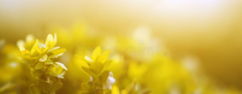 Από την εστίαση Άποψη φύσης του κίτρινου φύλλου στον κήπο στοκ εικόνες
