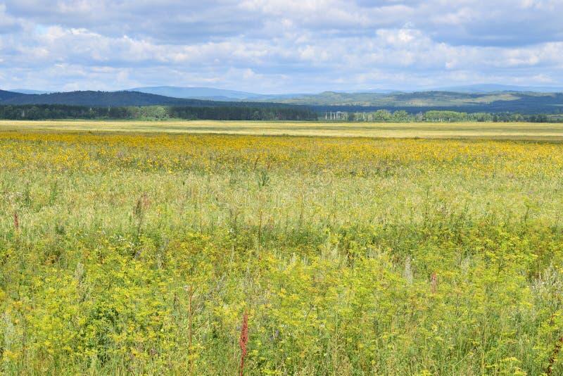 Από το $λ* ψασχκηρ δρόμος μέσω των λόφων Ural και των τομέων λιβαδιών στοκ εικόνα με δικαίωμα ελεύθερης χρήσης