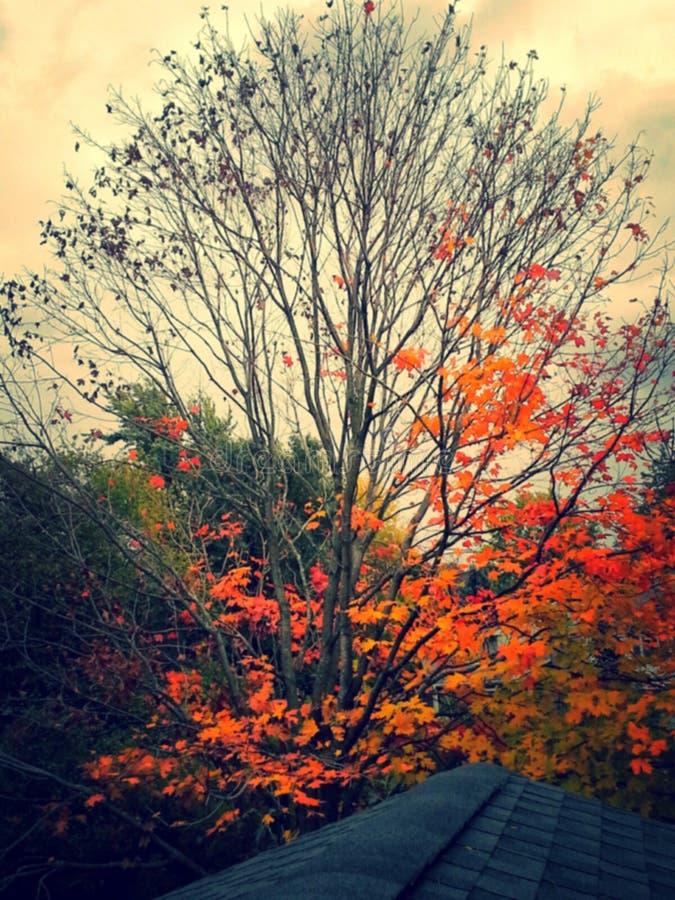 Από το χρώμα στο κενό στοκ φωτογραφίες
