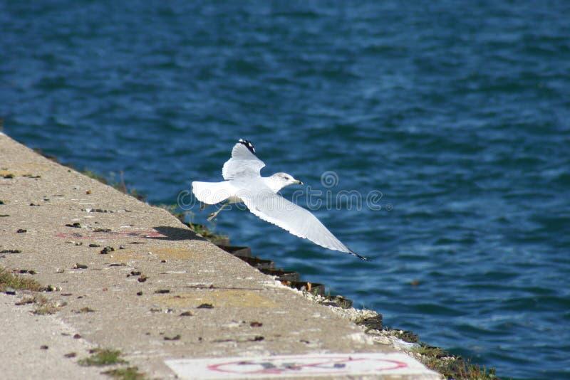 από seagull πάρτε στοκ φωτογραφία