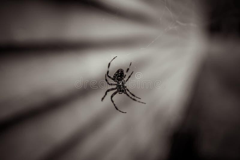 Αράχνη δίπλα στην εκκλησία και το νεκροταφείο στοκ εικόνες