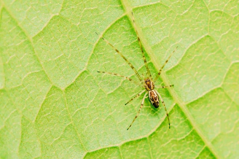 Αράχνη Ιστού βρεφικών σταθμών στο φύλλο στοκ φωτογραφίες