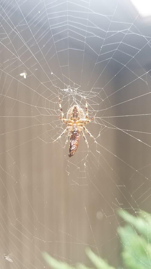 Αράχνη, Ιστός στη βροχή στοκ φωτογραφίες