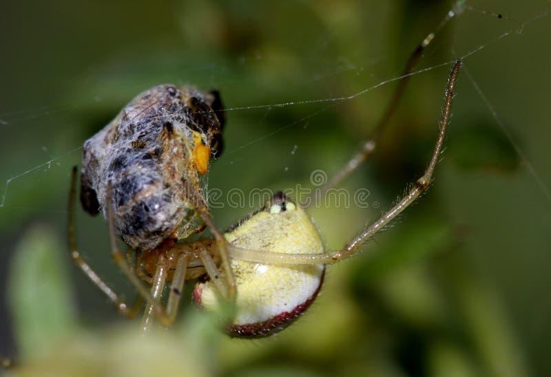 αράχνη ιστών αράχνης στοκ εικόνα