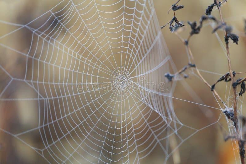 Αράχνη καθαρή με τη δροσιά το πρωί στοκ φωτογραφία