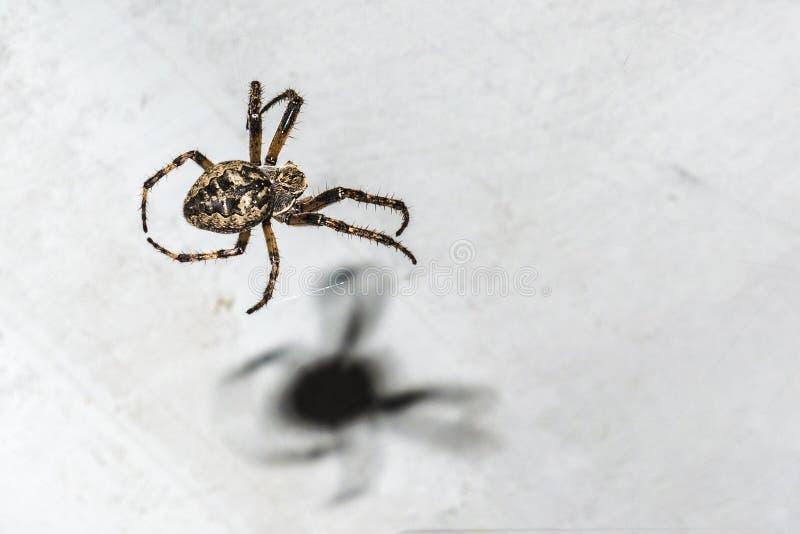Αράχνη με έναν ιστό αράχνης στο υπόβαθρο ενός άσπρου αντικειμένου τη νύχτα στοκ εικόνες με δικαίωμα ελεύθερης χρήσης