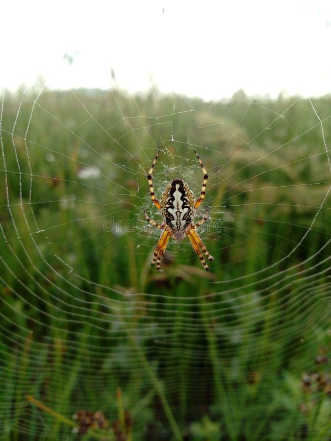 Αράχνη με τον ιστό αράχνης στοκ εικόνες