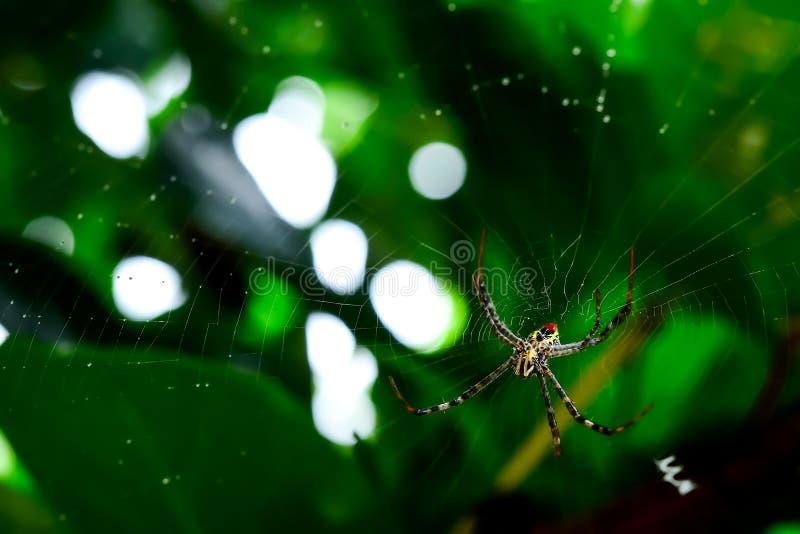 Αράχνη που περιμένει το θήραμα που ταΐζει με την ίνα του στοκ φωτογραφία με δικαίωμα ελεύθερης χρήσης