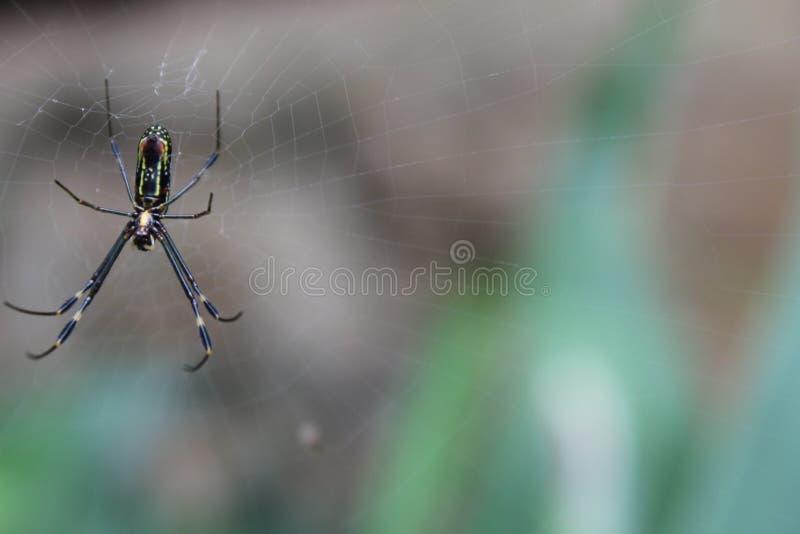 Αράχνη που στηρίζεται στον Ιστό του στοκ εικόνες