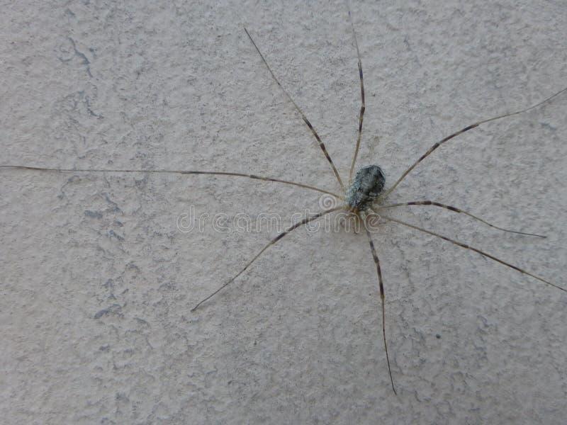 Αράχνη στον τοίχο στοκ εικόνα