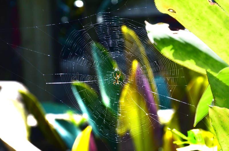 Αράχνη στον υφαμένο Ιστό Pinal de Amoles στοκ φωτογραφία