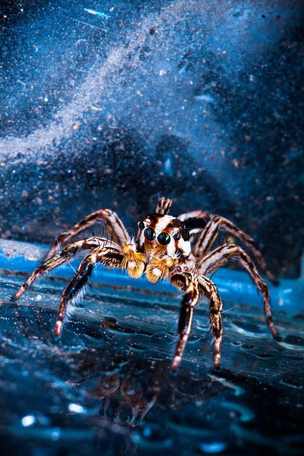 Αράχνη στο διάστημα στοκ εικόνα με δικαίωμα ελεύθερης χρήσης