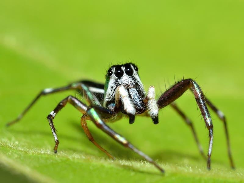 Αράχνη στο ζωηρόχρωμο υπόβαθρο στοκ εικόνες