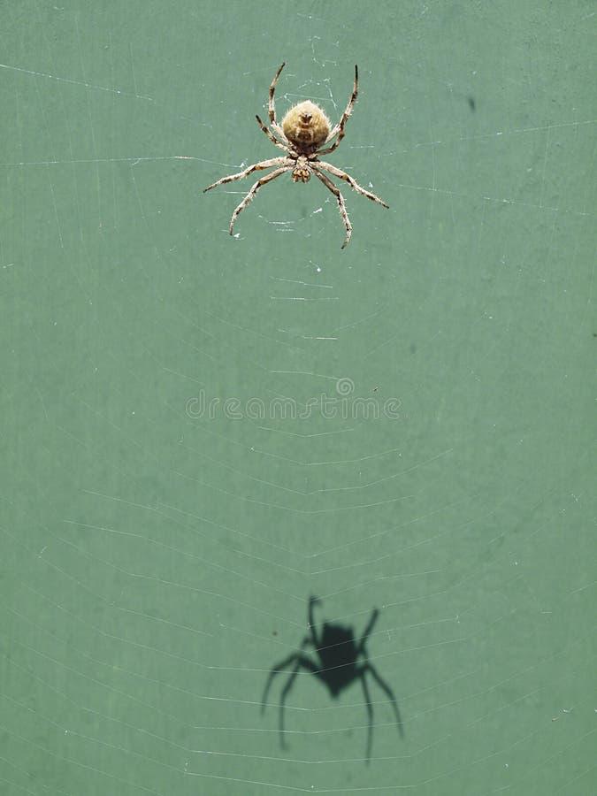 Αράχνη σφαιρών στοκ φωτογραφίες